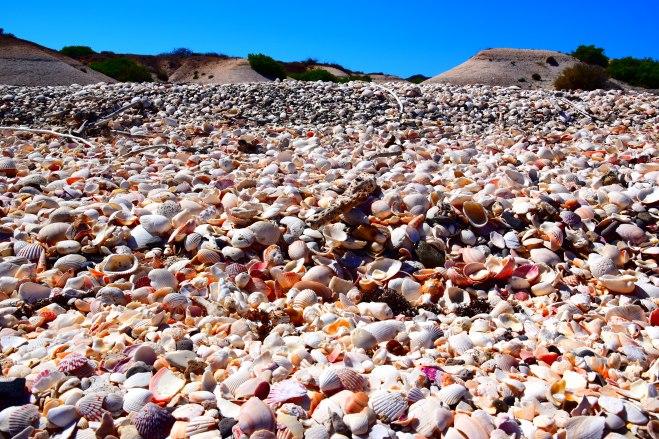 Shell Beach Punta Chivato
