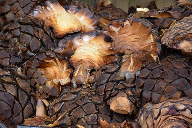 Coeurs d'agave cuit à la vapeur