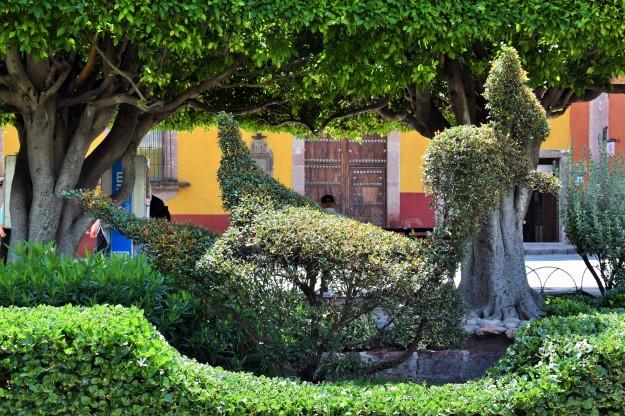 Garden from San Miguel de Allende