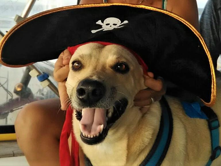 Pirata (2)